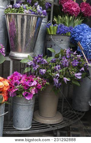 Flower For Sale. Purple Anemone In Zink Bucket