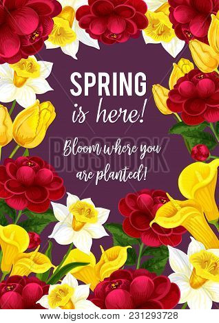 Spring Is Here Quote And Blooming Flowers Bouquet For Seasonal Springtime Greeting Card And Wishes.