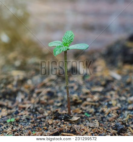 Marijuana Weed Smoking Close Up On Background
