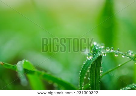 Water Drops Abstract On Leaf For Background