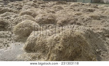 Dry Straw Waste Piled Up As Livestock Waste