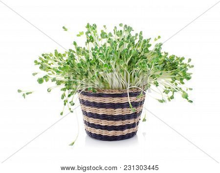 Pea Sprouts Isolated Close Up On White Background