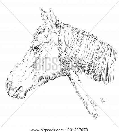 Horse Portrait. Horse Head With Long Mane In Profile In Monochrome Color Isolated On White Backgroun