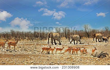 African Landscape Teeming With Wildlife Including, Elephants, Kudu And Impala In Etosha National Par