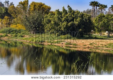 Reflection In The Water Of A Pond Of Flowering Mimosa Trees And Palms