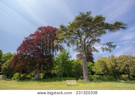 Park Bench. Beautiful Summer Countryside Image Of An Empty Wooden Bench Beneath Ornamental Trees. Co