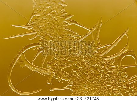 Gold Drawings On The Glass In The Frost .