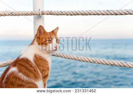 Red Cat Sitting And Waiting On Harbor Of Mediterranean Sea. Vibrant Colored Horizontal Summertime Ou