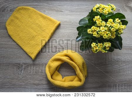Background Tree Flower Kalandiva Yellow Snood Scarf Cap Knitted With Knitting Needles Facial Smoothn