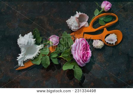 Huge Orange Metal Scissors Next To A Luxurious Rose On A Long Stem And Green Leaves On A Black Backg