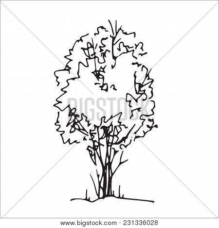 Shrub Hand Drawn Sketch, Freehand Drawing, Black And White