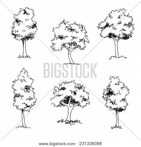 Tree Sketch, Architect Hand Drawing, Black Landscape Element