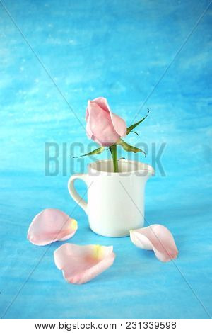 Pink Rose In A White Ceramic Jug. Petals Are Scattered Around It On Blue Background