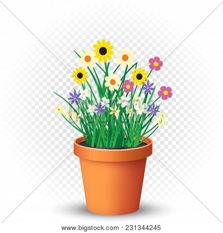 Flowerpot With Flowers Plant And Grass On White Transparent Background. Nature Spring Or Summer Abst