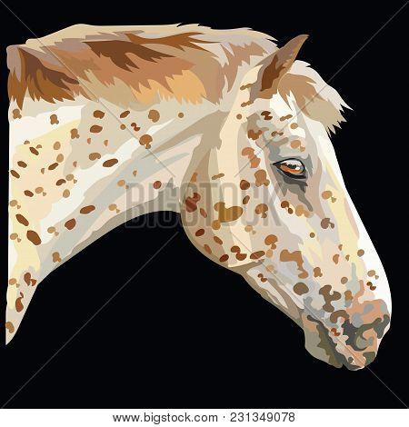 Colored Horse Portrait-2