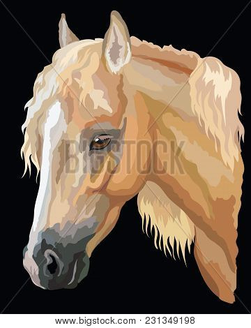 Colored Portrait Of Palomino Welsh Pony. Horse Head With Long Mane In Profile Isolated Vector Illust