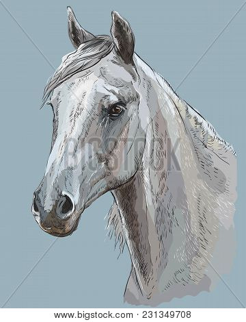 Colorful Portrait Of White Arabian Horse. Horse Head With Long Mane In Profile Isolated Vector Hand