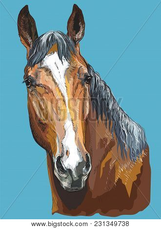 Colorful Portrait Of Trakehner Horse. Horse Head- Isolated Vector Hand Drawing  Illustration On Blue