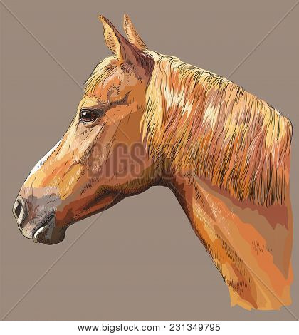 Colorful Portrait Of Sorrel Horse. Horse Head With Long Mane In Profile Isolated Vector Hand Drawing