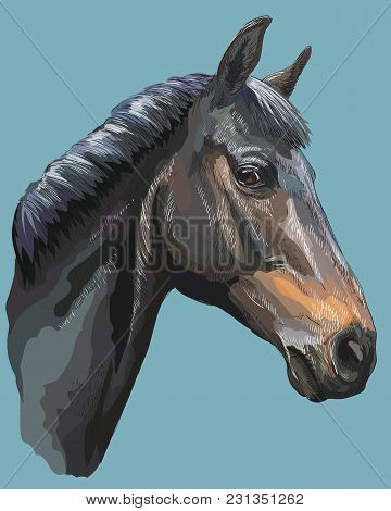 Colored Portrait Of Black Trakehner Horse. Horse Head In Profile Isolated Vector Hand Drawing Illust