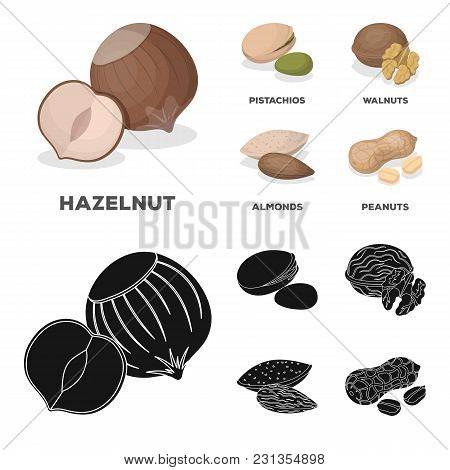 Hazelnut, Pistachios, Walnut, Almonds.different Kinds Of Nuts Set Collection Icons In Cartoon, Black