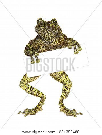 Green Frog With A Blank Business Card. Isolated On White