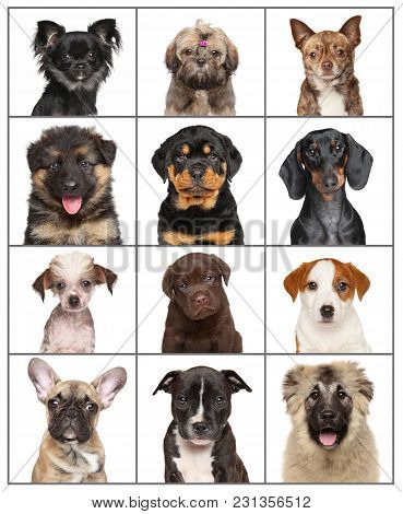 Portraits Of Dog Puppies Isolated On White Background