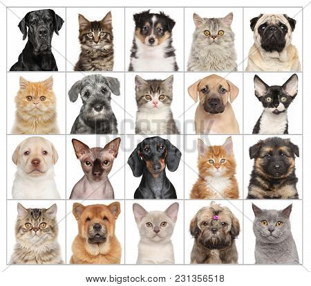 Portraits Of Animals Cats And Dogs Isolated On White Background. Animal Themes