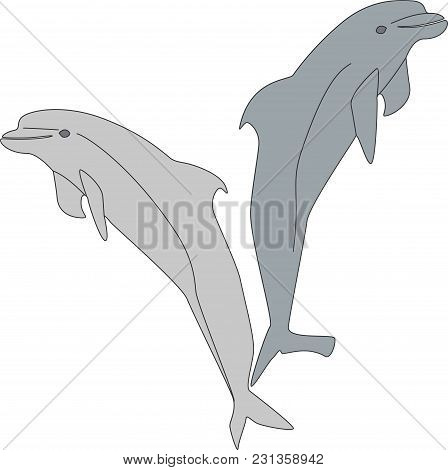 Two Dolphins Playing In The Sea, Animal Enjoyment