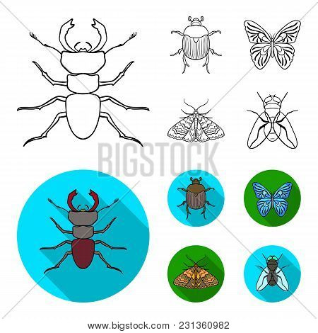 Wrecker, Parasite, Nature, Butterfly .insects Set Collection Icons In Outline, Flat Style Vector Sym