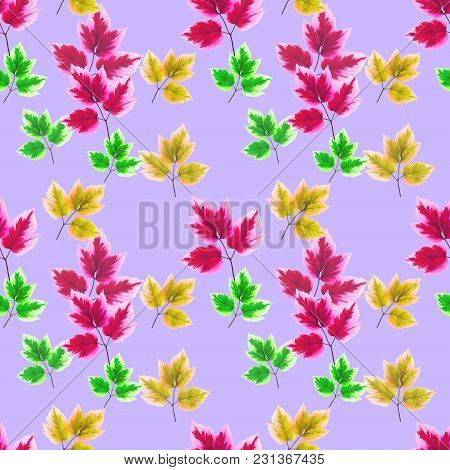 Maple Leaf. Texture Of Flowers. Seamless Pattern For Continuous Replicate. Floral Background, Photo
