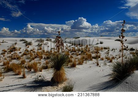 A Patch Of Vegetation Growing In White Sands National Monument, With White Puffy Clouds And Blue Sky