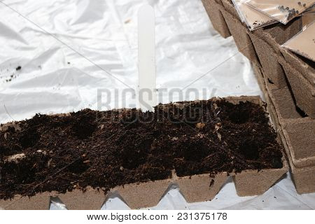 Sowing Seeds In Spring In Biodegradable Peat Pots This Is The Season For Growing