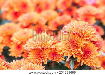 Flower Garden Sunny Image Photo Free Trial Bigstock