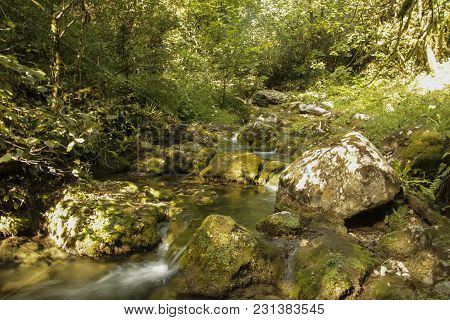Summer Natural Landscape In Fantasy Forest. Thickets Of Trees, Rocks Covered With Moss And Mountain