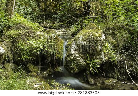 Summer Natural Landscape In Fantasy Forest. Thickets Of Trees, Rocks Covered With Moss