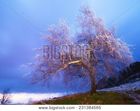 Hoarfrost Covered Trees Branches With Icy Blades. Freeze Dark Night In Background. First Chilly Nigh