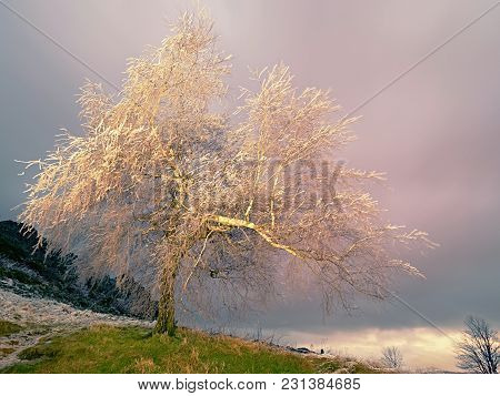 Icy Tree Branches Sway In Freeze Wind At Night. Shinning Ice On Twigs, On The Branches, The Ice Cove