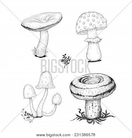 Cep Mushrooms Vector Sketch Set With Forest Accessories: Moss, Plants. Edible Black Mushroom Isolate