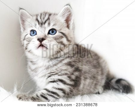 Cute Kitten Is Sitting. Striped Kitten. Kitten For Advertising Your Products
