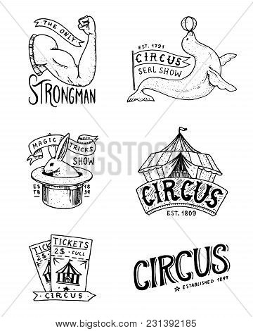 Carnival Circus Badge. Banner Or Poster With Animals. Strongman And Seal, Hare In The Hat, Magic In