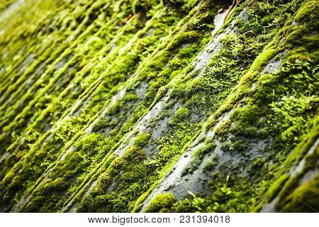 Roof Tile Overgrown With Moss Background (low Depth Of Field)