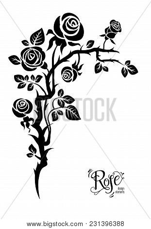 Black Elegant Silhouette Of Roses For Holiday Design Wedding, Anniversary, Party, Birthday. For Invi