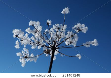 Frozen Crystal Flowers On A Background Of Blue Sky. Winter Wonder Of Nature Crystals Of Frost.