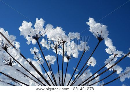 Crystal Ice Flowers On A Background Of Blue Sky. Winter Wonder Of Nature Crystals Of Frost.