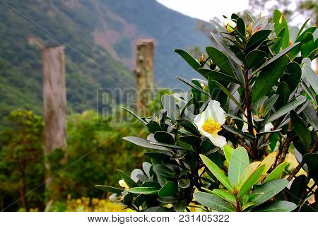Flowers And Defocusesd Stellas At The Wisdom Path In Hong Kong