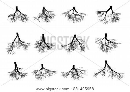 Tree Roots Set Isolated On White Background . Black Image Of Roots Underground, Part Of The Body Of