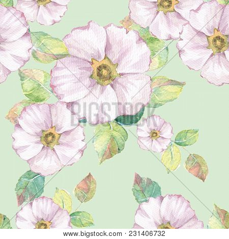 Delicate White Flowers. Hand Drawn Watercolor Floral Seamless Pattern 3
