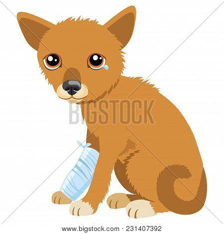Sad Dog Story. Vector Illustration Of Cute Sad Dog Or Puppy. Sick Dog With Splinting Leg. Veterinary