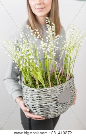 Lilies Of The Valley In A Gray Wicker Basket. Fresh Spring Flowers As A Gift.